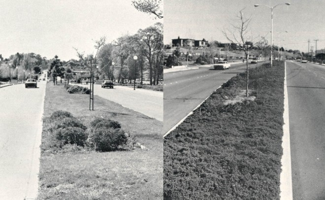 Two median islands: one planted with lawn, raphiolepis, crape myrtle and pines requires bi-weekly irrigation; the other planted with dwarf coyote bush, arctostaphylos, ceanothus and zelkovas can require only bi-monthly irrigation. Maintenance costs as well as water waste are not justified for median island lawns.