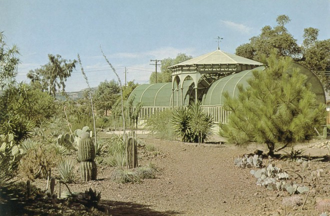 The shadehouse (Ruth's Folly) and desert area of Montezuma pine (right) saguaros, agaves, yuccas and cacti. Three photographs by Lester Hawkins.