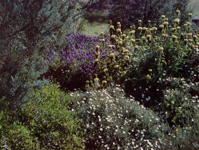 Phlomis fruticosa, Lavandula stoechas and Cistus sp.