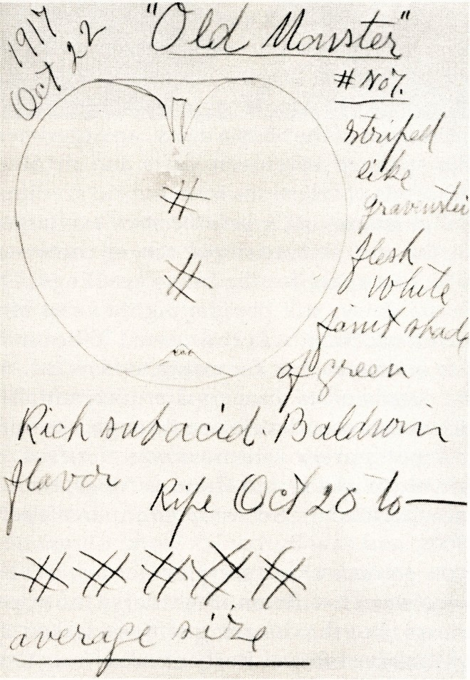 Page from Burbank's notebook.