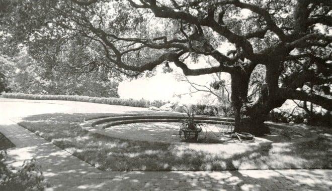 The outdoor room under an oak at El Novillero Author's photograph.