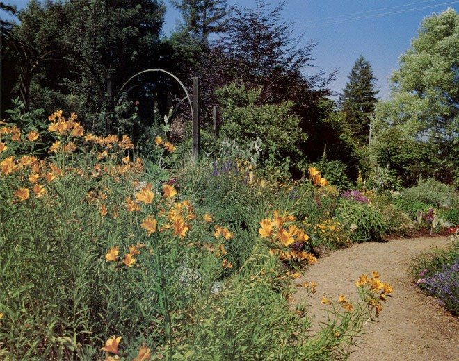 Recently planted border in the author's garden with alstroemerias in foreground. Photograph by W.G. Waters.