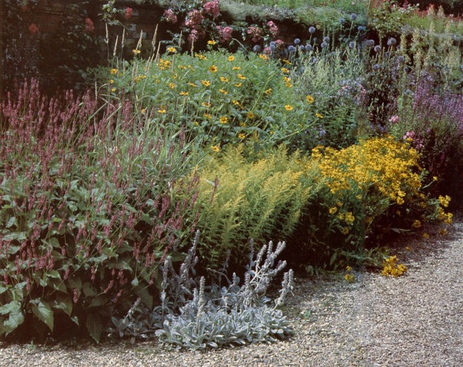 Heliopsis 'Bladhams' and Helenium autumnale 'Pumilum' in border at Blickling Hall, England. Photograph by Pamela Harper.