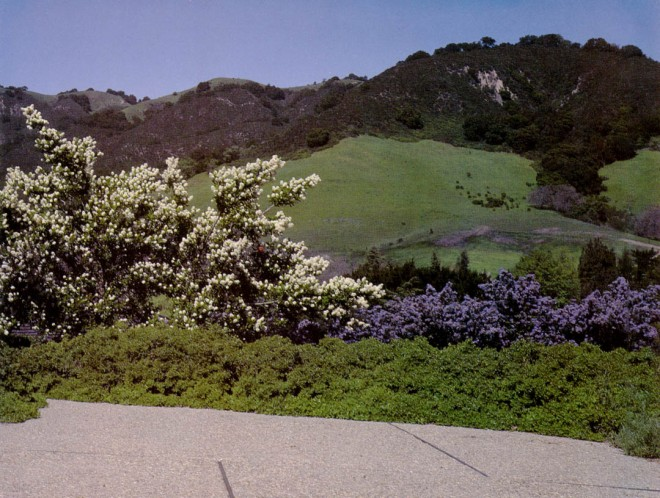 Ceanothus in bloom and low-growing baccharis harmonize with the cool green hillsides of spring. Photographs by the author.