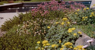 Warm tones of pink-flowered erigeron and pink- and yellow-flowered buckwheats blend with the brown hills of summer