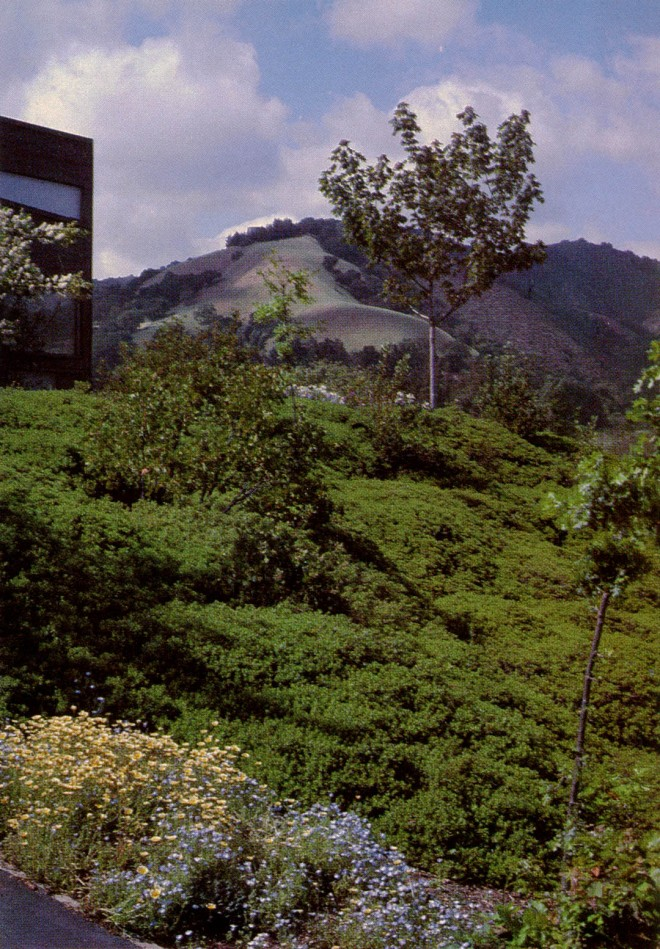 Mounding ground cover of baccharis on bank suggests the rounded forms of hills beyond