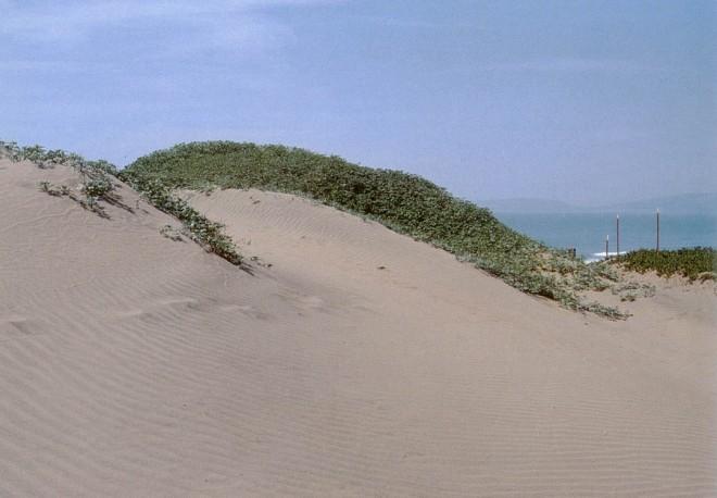 Dunes on the beach, San Francisco. Author's photograph