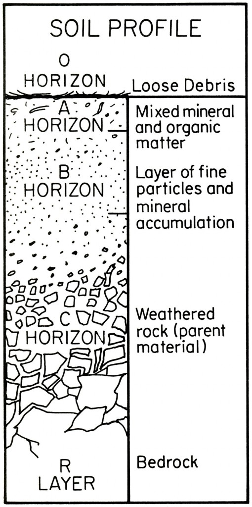 Diagram of a typical soil profile, showing constituents and positions of horizons