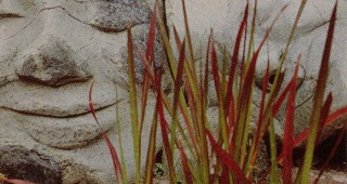 Pair of contented heads in serpentine with blood grass, Imperata cylindrica. Photographs by George Waters
