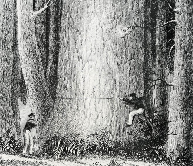 Engraving from Charles Wilkes' Narrative of the United States Exploring Expedition, 1845. From the Special Collections and Preservation Division, University of Washington Libraries, courtesy of the Bloedel Reserve
