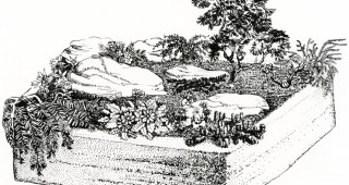 A hypertufa trough with an elegant arrangement of plants and rock. Drawing by Rosemary Burnham from Davidsonia, Spring '74