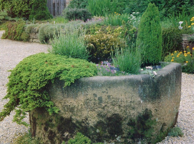 Massive natural stone trough at Harlow Car Gardens, Yorkshire, with prostrate and columnar conifers, Linaria alpina, and other plants. Photograph by George Waters