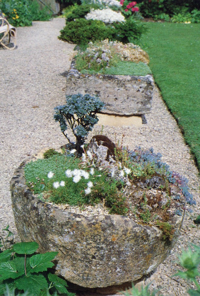 Stone troughs in Joe Elliott's garden in Gloucestershire. Behind the white-flowered Dianthus squarrosus in the foremost trough is the gray-leaved Salix x boydii. Photograph by George Waters