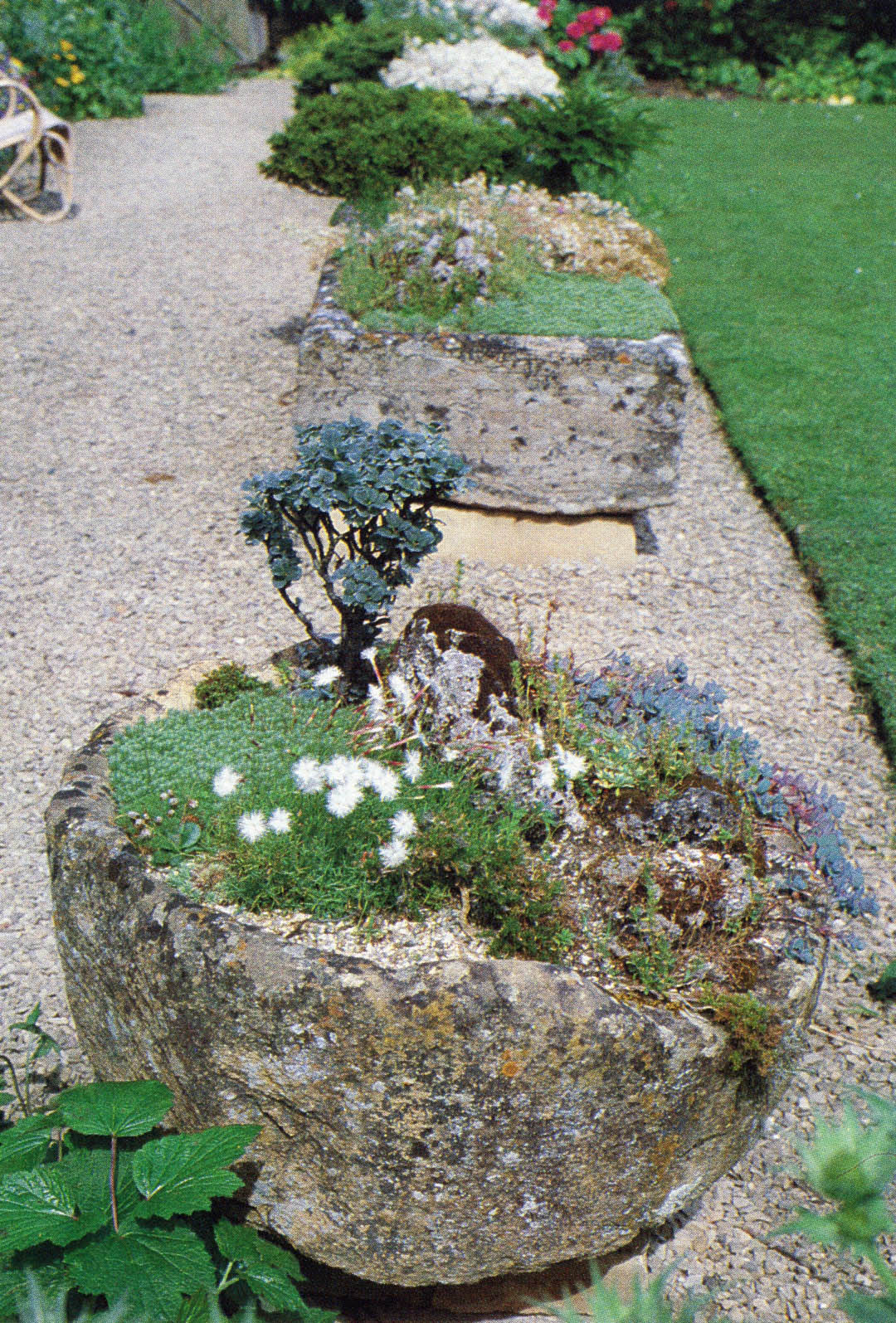 Stone Troughs In Joe Elliottu0027s Garden In Gloucestershire. Behind The  White Flowered Dianthus Squarrosus