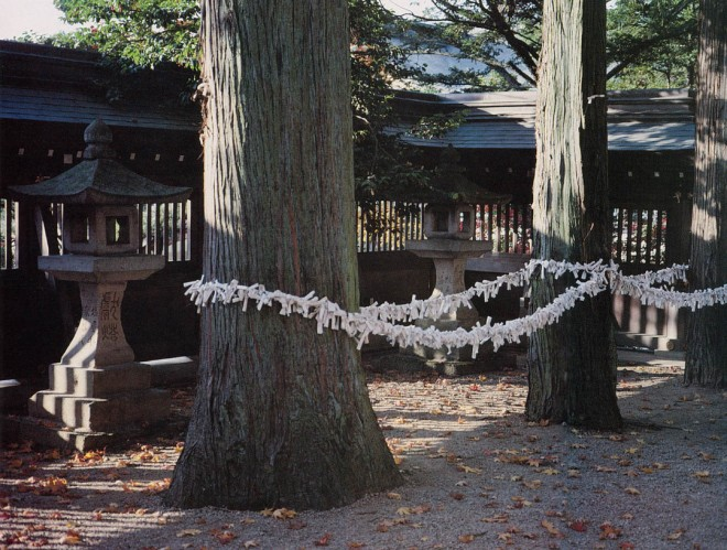 The formal order of this row of trees at a Shinto shrine is reinforced by the hundreds of fortunes written on white paper fixed to the chord. Takayama