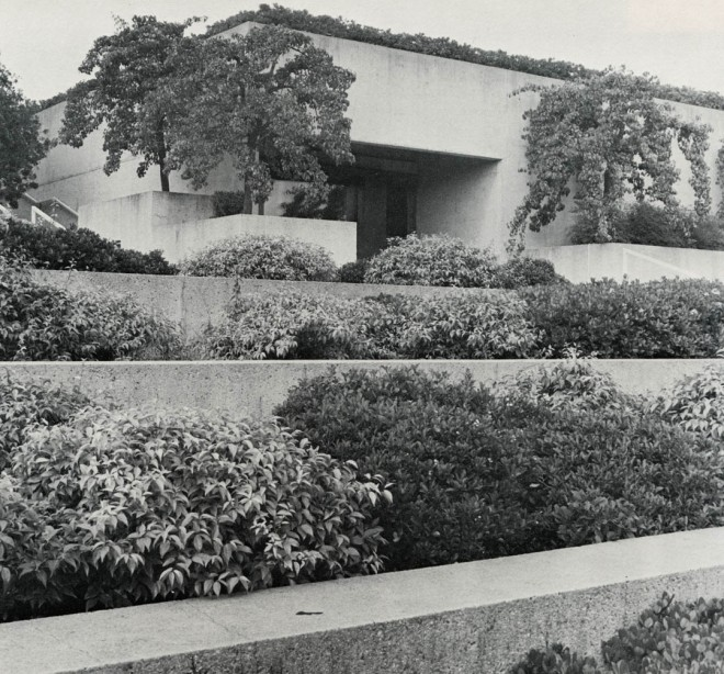 Rhaphiolepis indica and Xylosma congestum in tiered containers in the Oakland Museum gardens. Photograph by Joe Samberg courtesy of the Oakland Museum