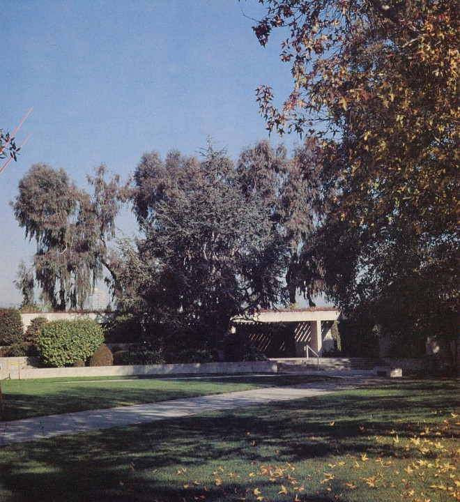Courtyard in the roof gardens, liquidambars in the foreground, Atlas cedar and eucalypts to the rear. Author's photograph