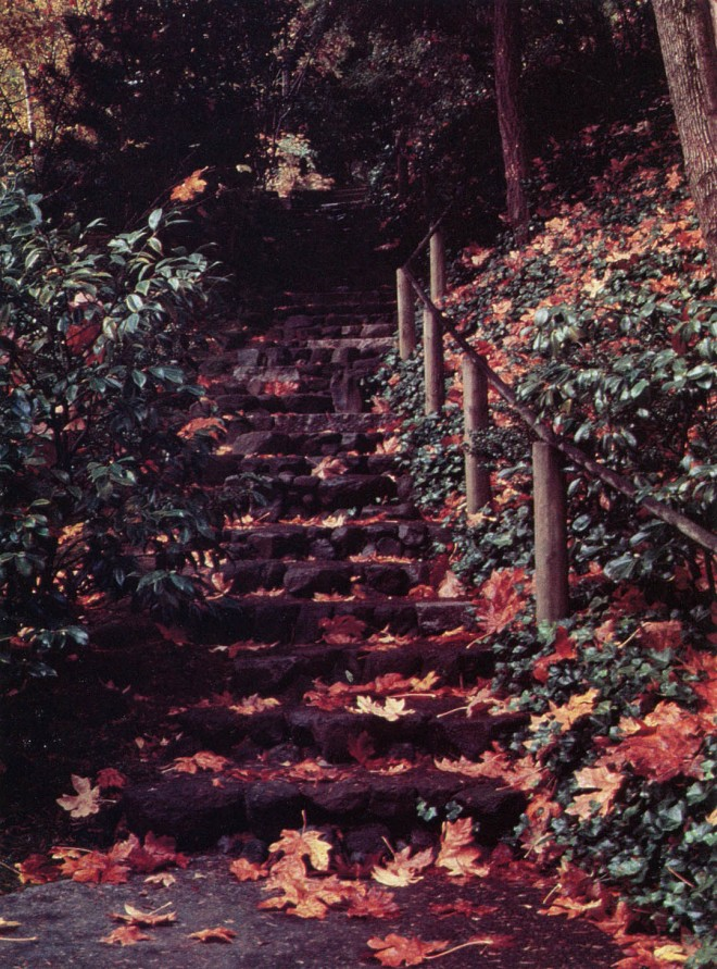 Stone steps in autumn. Author's photograph