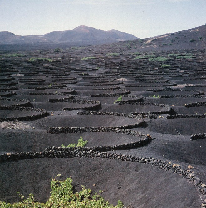 The harsh volcanic environment of Lanzarote demands a frugal, disciplined style of farming and creates a haunting, surrealistic landscape. Author's photographs