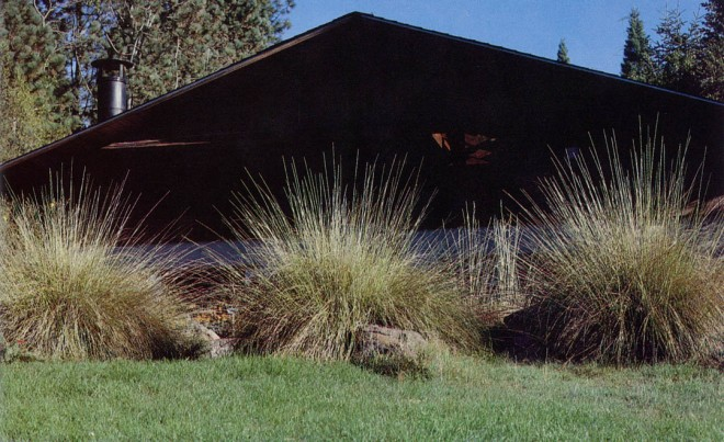 Basket grass (Muhlenbergia rigens), California native alternative to pampas grass, screening the garden's Juniper Lodge