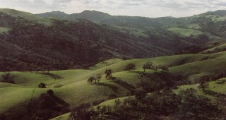 Reports from nineteenth-century travelers of native oaks dotting the hills in park-like scenes such as this reinforce notions of California as Arcady. Photograph by Bob Walker