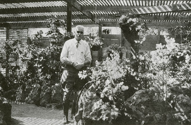 Passionate gardeners such as A D Robinson invested their entire lives in horticultural civic improvements. Famous in begonia circles, hybridizer and nurseryman Robinson also did much to beautify San Diego for its 1915 exposition and to promote it as a garden mecca in southern California. Photograph courtesy of the San Diego Floral Association