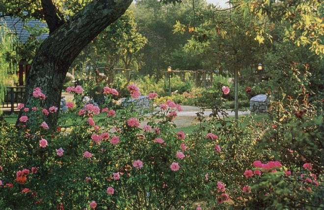 Descanso Gardens International Rosarium. Author's photograph