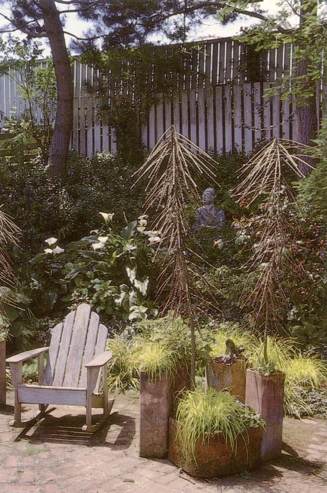 A pair of juvenile Pseudopanax ferox accent a corner of Bob Clark's garden in Oakland