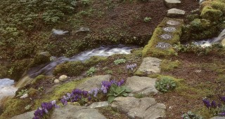 Mosses and rocks intermingle along a frothy stream in the Garthwaite/Sullivan Garden