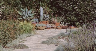 A meandering path through plantings of herbs, succulents, and groundcovers between house and swimming pool. Photograph by RGT