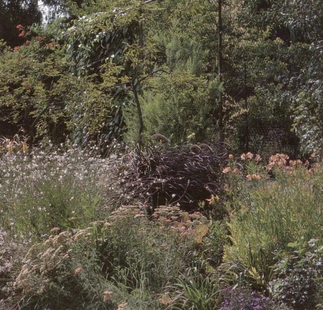 """Alstroemerias star in the """"sherbet garden."""" Author's photograph"""