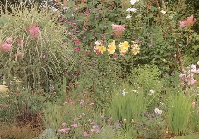 The mid-summer border with grasses, lilies, Gladiolus callianthus, and Verbena bonariensis
