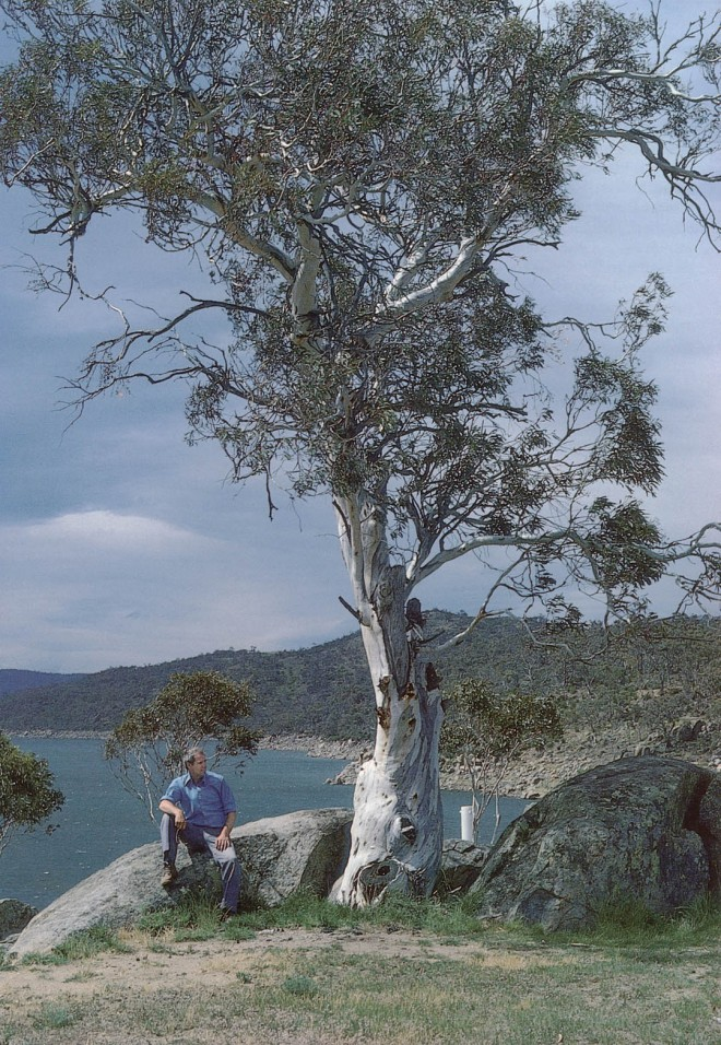 Alpine snow gum (Eucalyptus pauciflora ssp. niphophila) in Australia's Snowy Mountains. Author's photographs