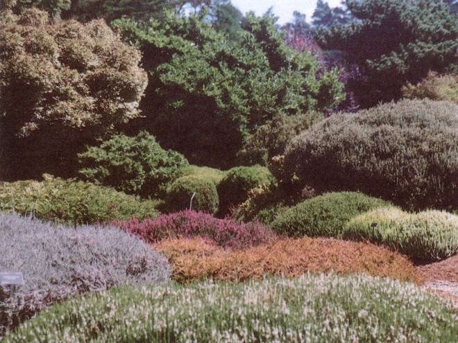 An undulating crazy quilt of heaths and heathers at the Mendocino Coast Botanic Gardens. Photographs by Michael Addison, except as noted