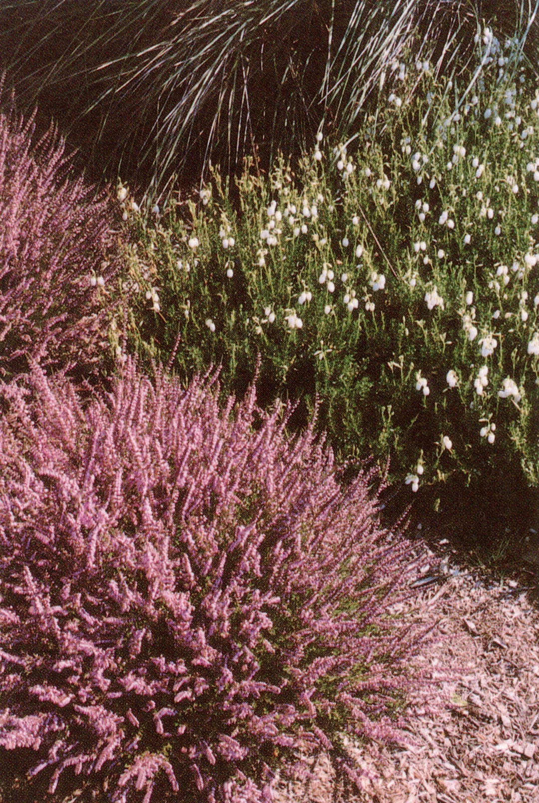 Pacific Horticulture Society | North Coast Gardening with Heather