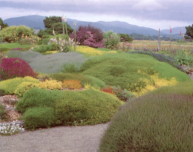 The undulating mounds in the Thompson heather garden mimic the rolling hills in the distance. Photograph by RGT