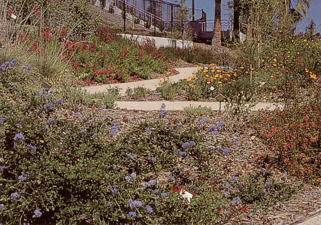 California native plants, such as Ceanothus 'Joyce Coulter', California poppies (Eschscholzia californica), and red monkey flower (Mimulus puniceus) provide spring color