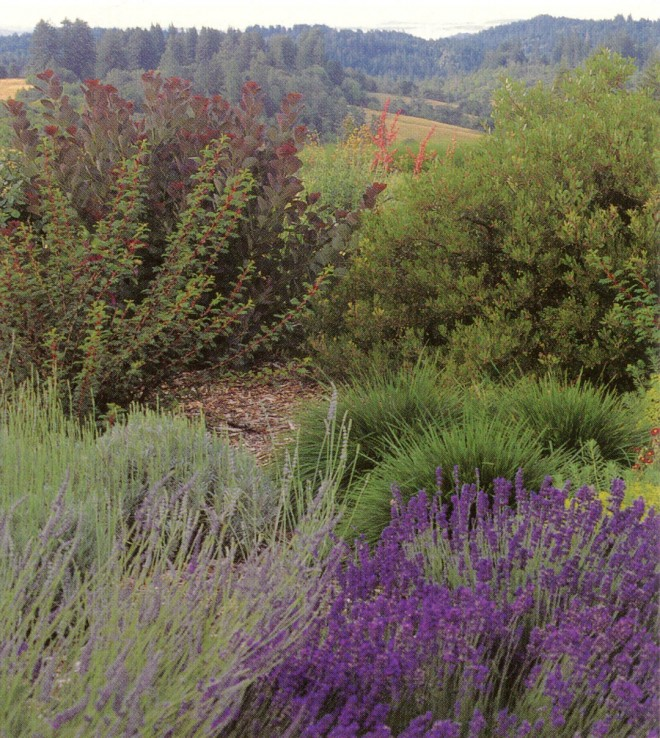 Lavandula angustifolia 'Hidcote', Rosa sericea ssp. omiensis f. pteracantha, and a purple smoke bush (Cotinus coggygrya 'Norden Red') provide the foreground for an expansive view of the lower fields and distant hills
