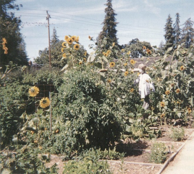 A student-made scarecrow protects beds of sunflowers and other crops