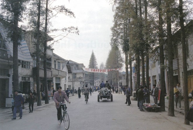 Dawn redwoods (Metasequoia glyptostroboides) lining a street in Madaoqi, China. Author's photographs