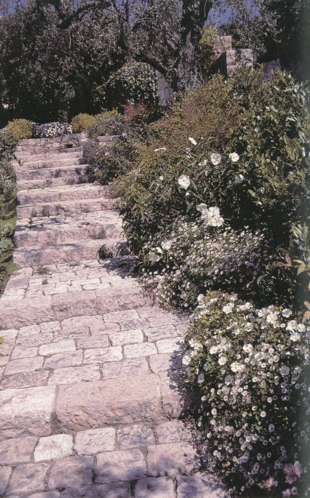 The warmth of the rock steps draws out the foliar aroma of rock rose (Cistus sp.). The white flowers reflect the moonlight and light the way. (Jean Mus garden, Provence)