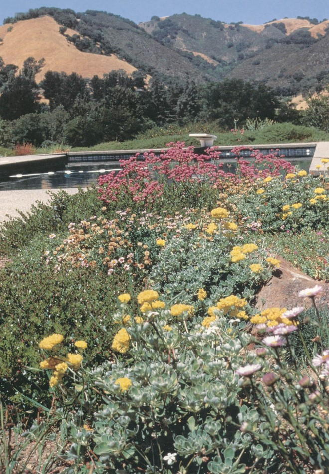 Late spring flowering of California natives against the already golden hillsides of summer. (Grier garden, Lafayette)