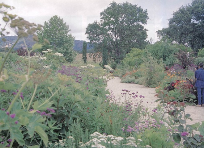 The Fetzer Vineyards' habitat borders in summer. Author's photographs
