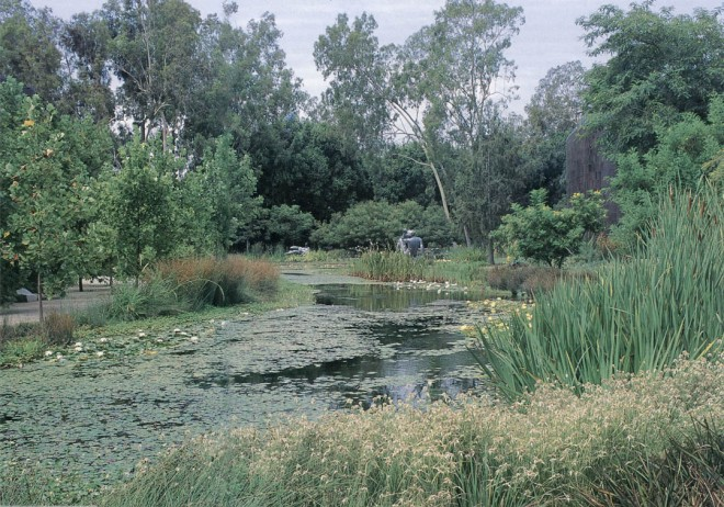 The central pond at the Norton Simon Museum, with star sedge (Rhynchospora latifolia) in the foreground, backed by yellow flag iris (Iris pseudacorus), waterlilies (Nymphaea hybrids), and sculptures by Aristide Maillol and Henry Moore in the distance. Author's photographs