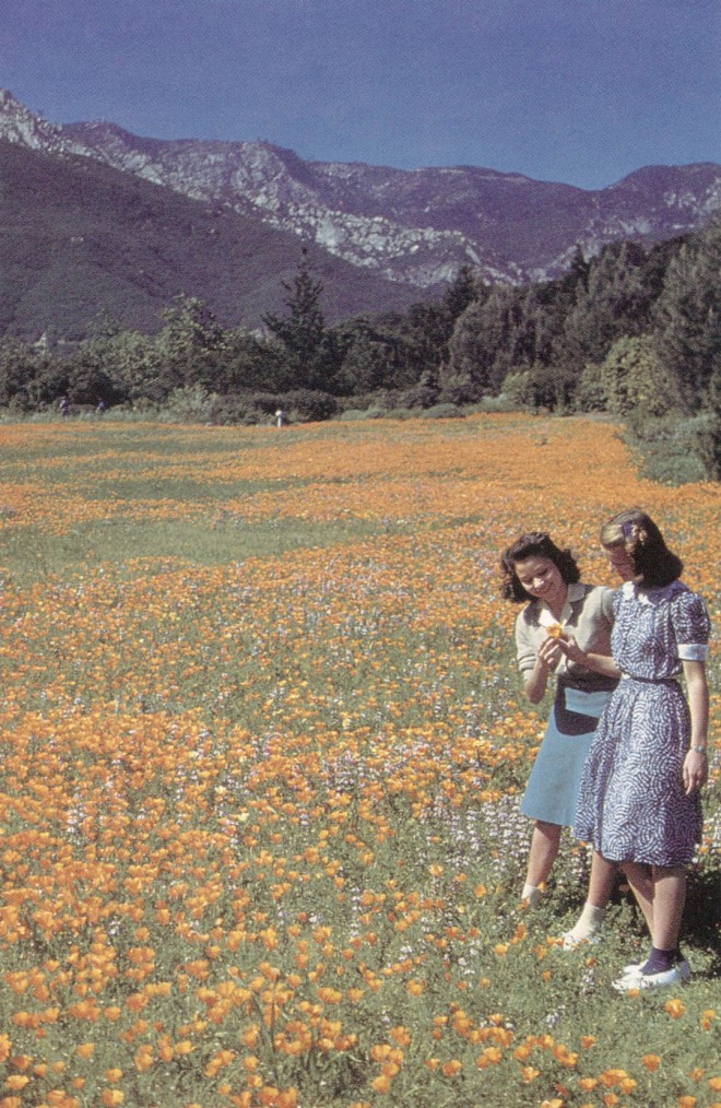 The Meadow, circa 1940, planted entirely to California poppies