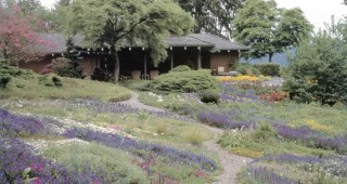 Springtime in the alpine garden at the Chase Garden in Orting, Washington. Photographs by William Noble