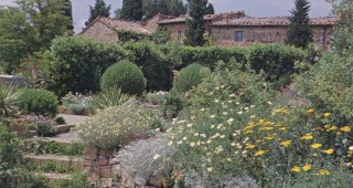 Terraced beds at Venzano, Tuscany