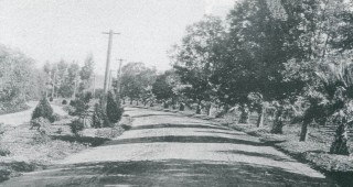 Victoria Avenue in 1900. Purchasers of land along the avenue were required by the developer (Riverside Trust Company) to plant and maintain trees along the frontage of their property. Photograph courtesy of Victoria Avenue Forever
