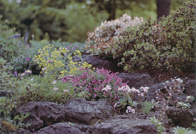 Lewisias and penstemons of the Northwest color the quarter-acre rock garden. Photograph by Linda McMahan