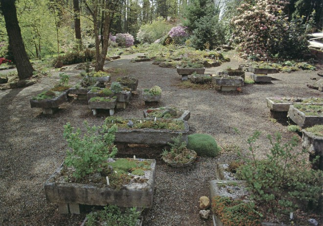 Troughs dominate the scene at the north end of the rock garden. Author's photograph